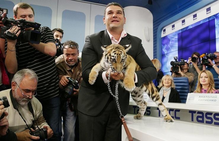Tiger cub presented at a news conference at ITAR-TASS