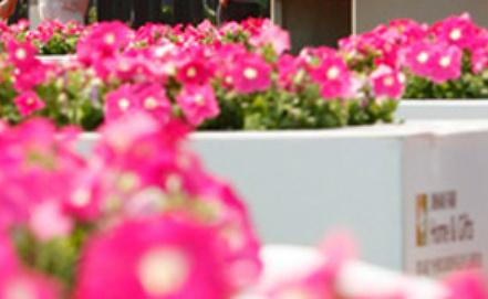 Photo www.jinhanfair.com