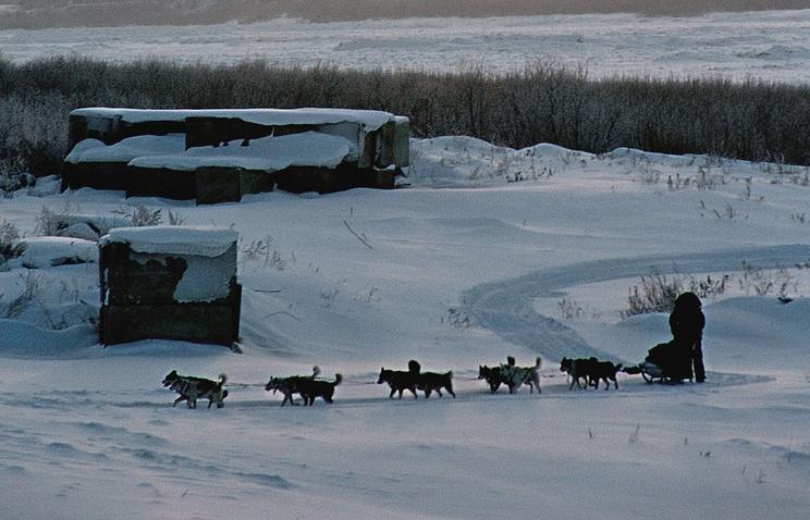 Собачья упряжка, на которой француз Николя Ванье путешествует по Сибири