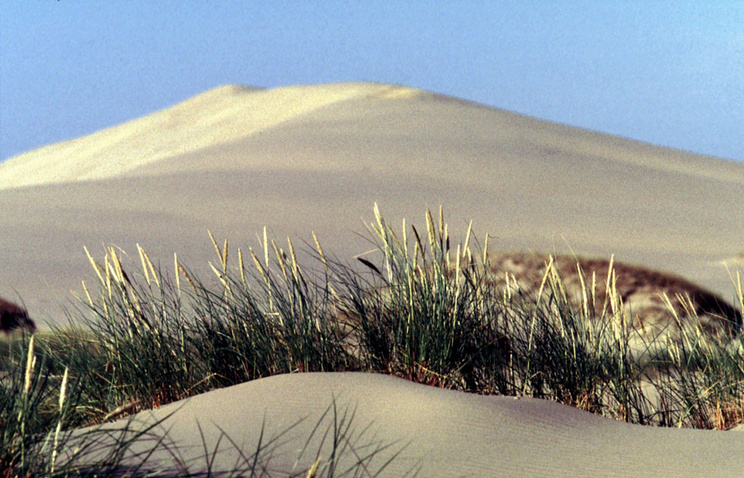 Песчаная дюна на Куршской косе