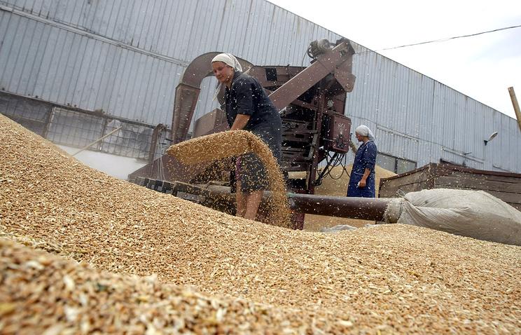 На зерновом току