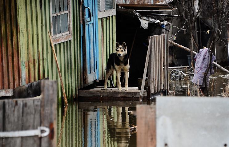 Двор затопленного дома в городе Спасск-Дальний в Спасском районе