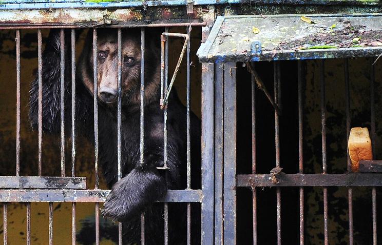 """Медведь в вольере в зоопарке на территории городского парка """"Зеленый остров"""""""