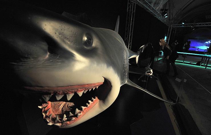 Интерактивная выставка «Акулова неделя» откроется вМосковском зоопарке