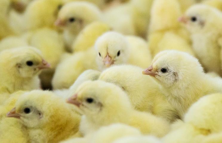 ВРФ могут запретить ввозить птичку изПольши