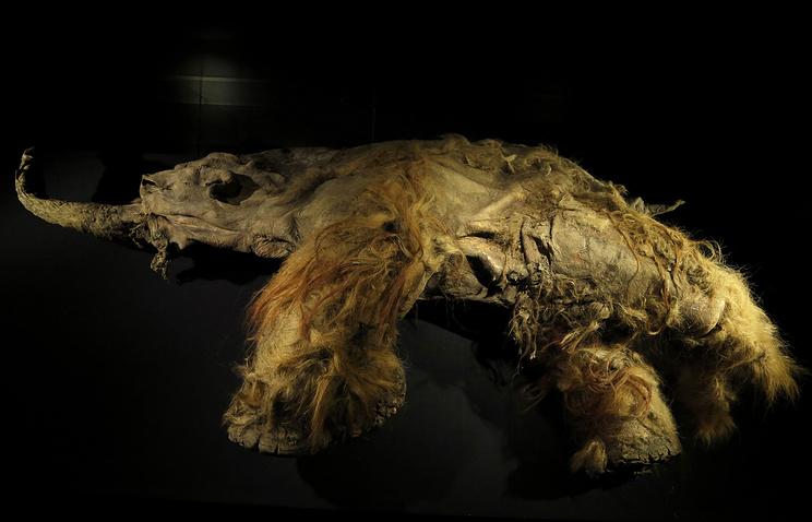 Ученые якутского СВФУ изучили ДНК старинных животных