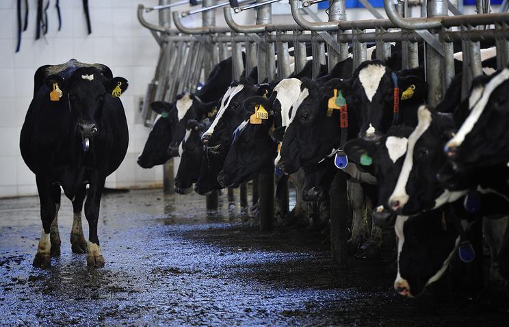 Чиновники опровергли повышение цен намолоко
