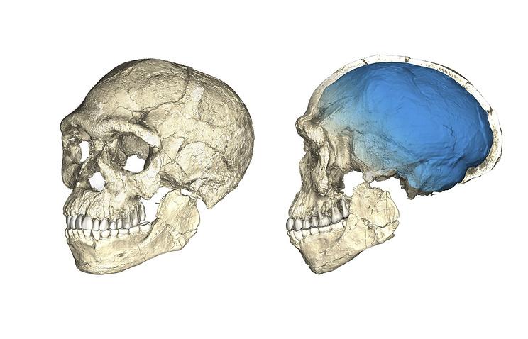 Реконструированные фрагменты черепов обнаруженные районе пещеры Джебель-Ирхуд, Марокко