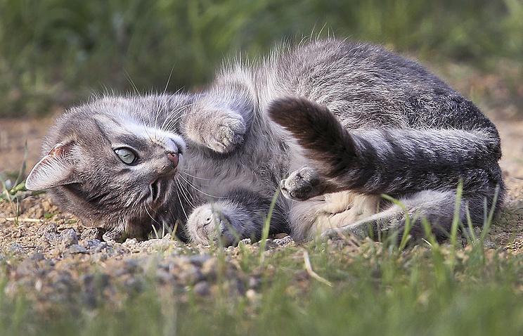 ВТурции построят деревню для кошек