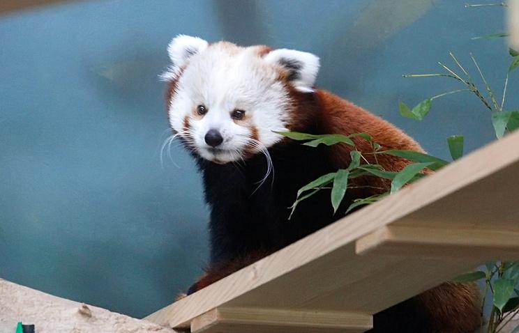 Заобитателями Московского зоопарка можно наблюдать дистанционно врежиме онлайн