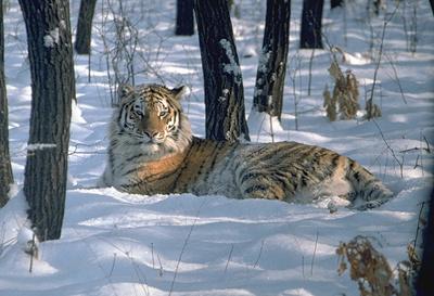 Фото www.amur-leopard.org