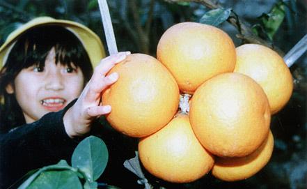 Фото из архива Киодо-ИТАР-ТАСС