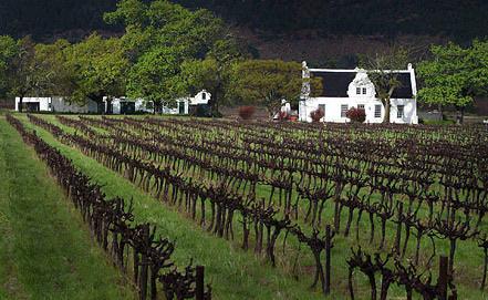 Виноградная ферма в ЮАР. Фото EPA/ИТАР-ТАСС