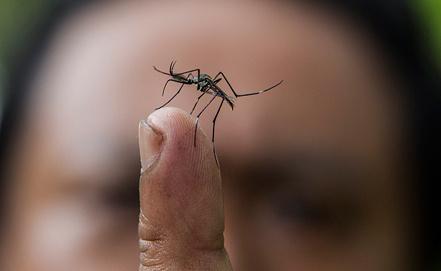 Комары - основные носители вируса, фото EPA/ИТАР-ТАСС