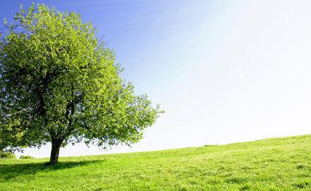 Фото www.climatechangereconsidered.org